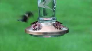 Solar Lighted Glass Hummingbird Feeder | Solutions