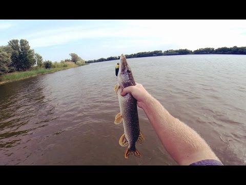 Ловля щуки на воблеры. Ловля щуки в траве. Ловля щуки у берега реки.