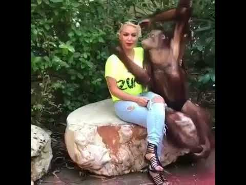Have you ever seen a monkey on kissing a girl? New funny video 2017. wach it.
