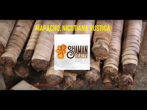 Mapacho - Nicotiana rustica - www.shamandealer.com