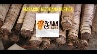 Popular Videos - Nicotiana rustica & Tobacco