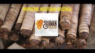 Popular Videos - Nicotiana rustica & Food