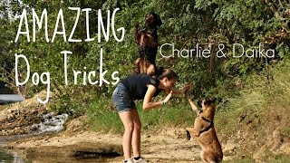 Amazing Dog Tricks [Charlie&Daïka]