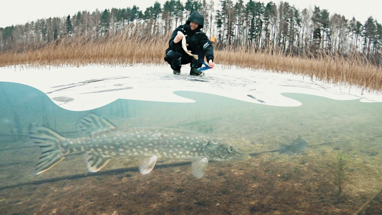 АТАКА ЩУКИ НА ЖЕРЛИЦЫ Первый лед 2019-2020 Зимняя рыбалка