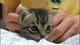 【可愛い野良猫動画を配信中】 チャンネル登録お願いします↓ https://www.youtube.com/channel/UCAK9_n7k0G5tdyoc1eFYccQ 【Twitterもしています。】 お気軽にフ...