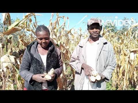 """Neues aus Kenia: Was ist """"SSN""""?"""