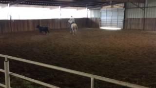 Bellini- Jared Lesh cowhorses