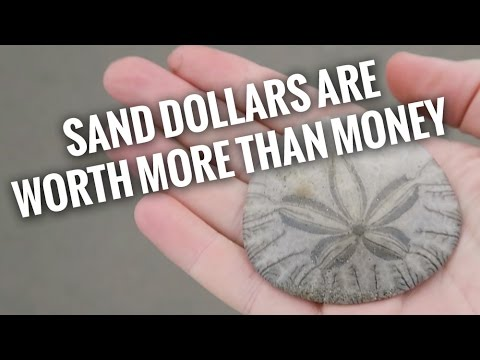 Sand Dollars Are Worth More Than Money