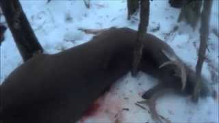WI 2014 Deer Hunting Gun Opener Buck!