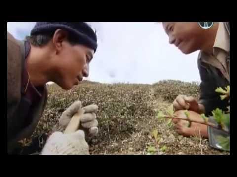 Чайный лечебный гриб: уход, полезные свойства