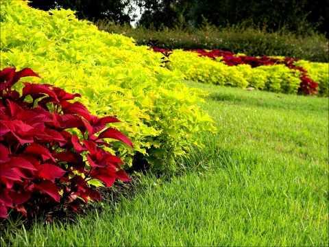 🍀🌻🌷 Колеус, выращивание, посмотрите, как просто и красиво!