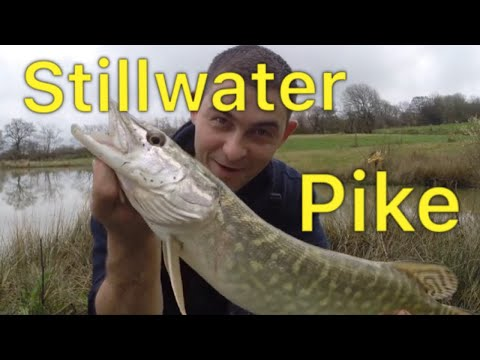 How To Catch Pike - Livebait Fishing For Pike
