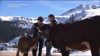 L'Abondance, la vache laitière de Savoie