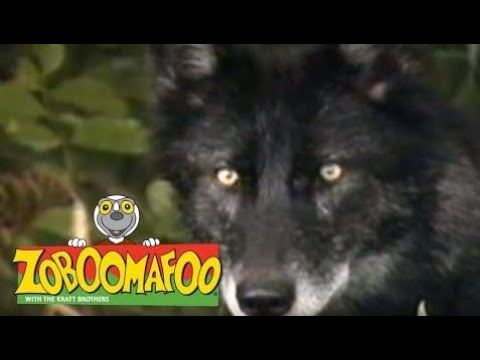 zoboomafoo on wikinow news videos facts