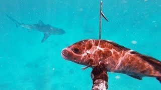 EP 14 - Spearfishing with SHARK! - Coral Trout, Spanish Mackerel & Red Emperor | Catch n Fry