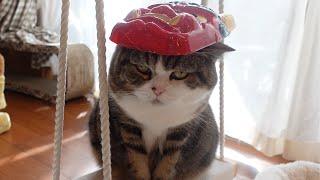 節分とねこ。-Setsubun and Cats.-
