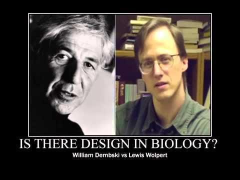 Creation Evolution Archives   Cross Examined   Christian     Rosa Rubicondior