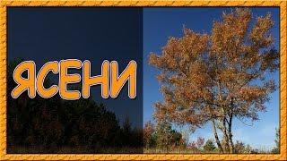Українські пісні онлайн. Ясени