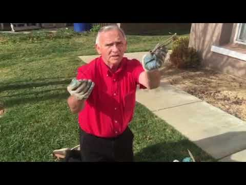 How Go-Pher Jack Catches Gophers With The Macabee Traps