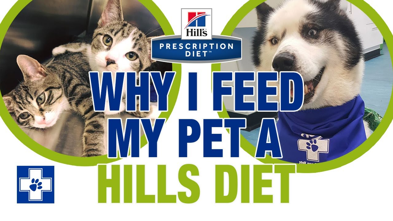 how do i feed my pet hills diet