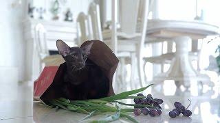 Профилактика отравлений у кошек ➠ Советы ветеринара