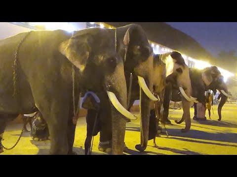 Thripunithura Vrischikolsavam 2017 -Elephants in Day 1 - Kerala Elephant Heroes