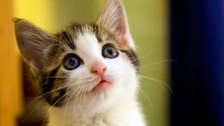 Cat Adoption & Cat Rescue: Tips for Adopting a Cat from a Shelter