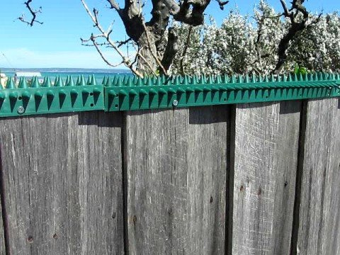 Fence Spikes Thorny Devil Spikes Youtube