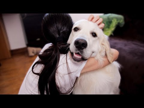 Cutest Video of My Funny Dog That Loves to Hug with My Wife