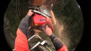 Cutting Down Trees with Head Cam and Husqvarna Chainsaw