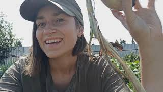 Лук из семян за сезон в одном видео! Мой опыт выращивания лука эксибишен через рассаду.