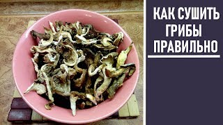 Как правильно сушить грибы в духовке  на зиму