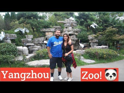 Yangzhou City, Jiangsu province, China trip to the  Zoo! (Vlog)