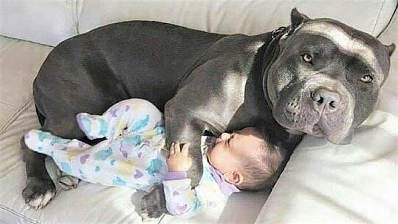 CUTE Nanny Dogs and Babies | Funny Dog loves Baby