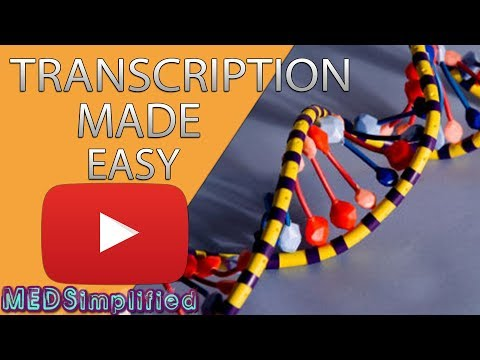 Transcription Made Easy- From DNA To RNA (2019)