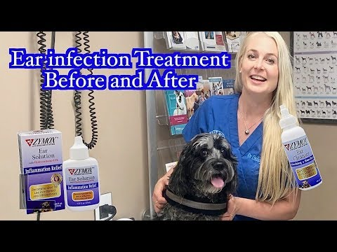 Ear Infection Treatment | Zymox Products Before And After