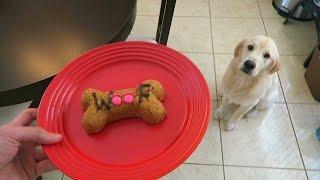 Super Cooper Sunday #17 - Coop Tries Gourmet Dog Treats!
