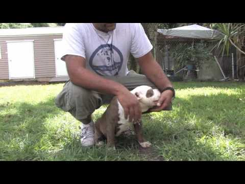 dog-training-:-how-to-stop-your-puppy-from-biting