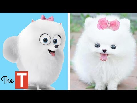 Thumbnail: 10 Secret Life Of Pets Characters In Real Life