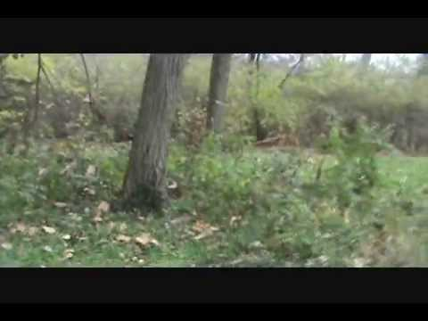 Absolute indisputable proof that bigfoot exists youtube sciox Images