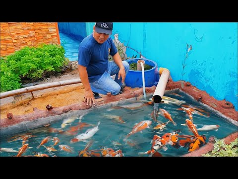 This Is What My Fish Farm Daily Routine Looks Like