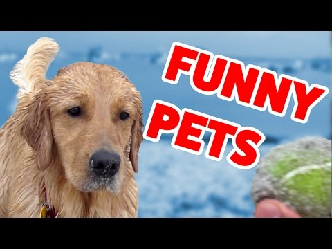 Try Not To Laugh At These Funny Pets Home Videos of 2016 Weekly Compilation | Funny Pet Videos