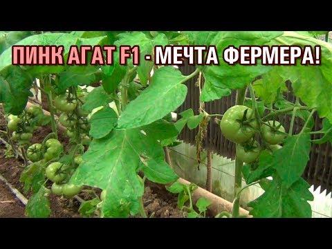 ПИНК АГАТ F1 - МЕЧТА ФЕРМЕРА! Часть-1 (10-04-2019)