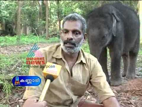 Elephant Attack In Kerala 2012 Rejuvenation therapy f...