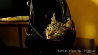 Спящие коты sleeping cats