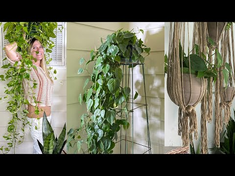 crazy-plant-stands!-|-12-easy-ways-to-elevate-your-houseplants