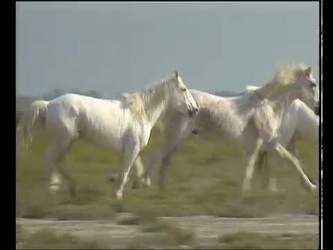 Grandeur Nature - Camargue une passion - Documentaire Animalier