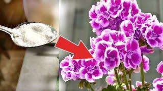 Всегда покупаю этот дешевый порошок в аптеке,  хватает надолго растения цветут божественно!