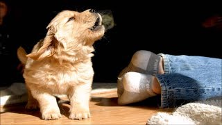Funny Dogs and Puppies Barking Compilation