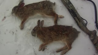 Small Game Hunting #28: 2 Cottontail Rabbits by 20 Ga. Shotgun